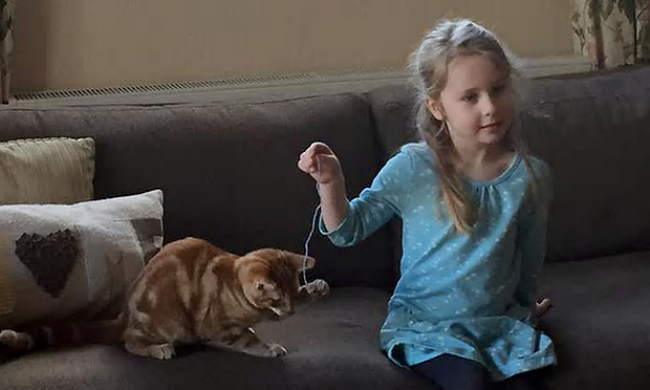 Cats Requested for Consideration to Assist Police Force by 5-Year-Old