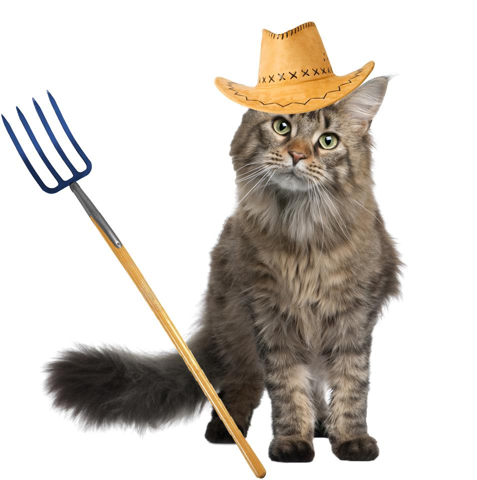 Give Those Cats A Job! Amazing Feral to Farm Program