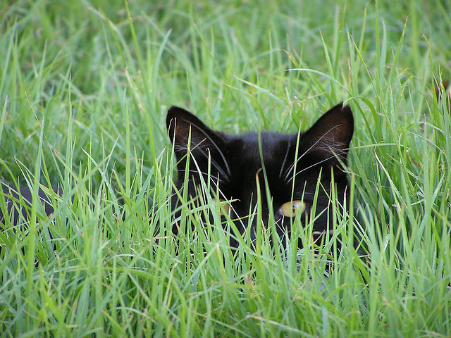 I am Pretty Sure You Can't See Me…Uh, Maybe