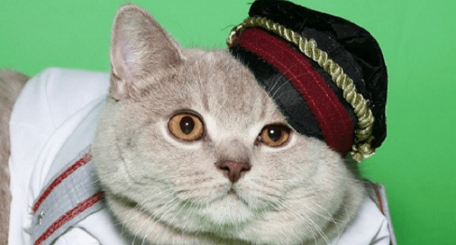 Rusik, The Caviar-Sniffing Police Cat