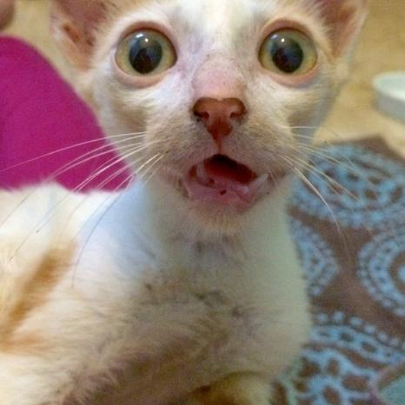 Smeagol: From the Street to a Home for the Love of an Angel