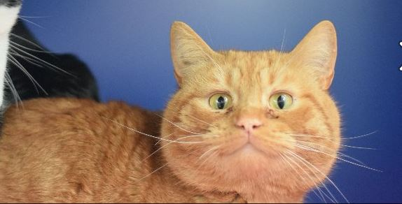 Cyber Cats Help More Moggies Like Tiddles Find Homes