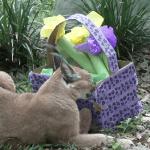Big Cat Easter EGGstravaganza