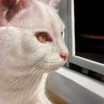 Turn Your Favorite Cat Photo Into A Life-long Memory