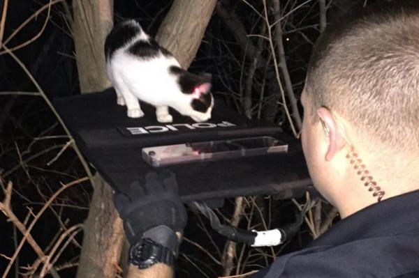 Police Officers Get Creative to Coax a Cat Out of a Tree