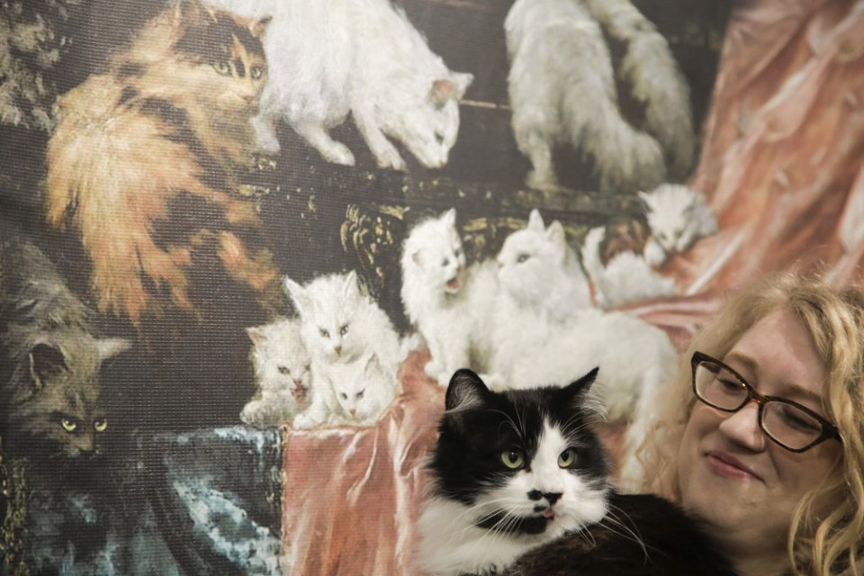 Stop in for Caturdays at the Portland Art Museum