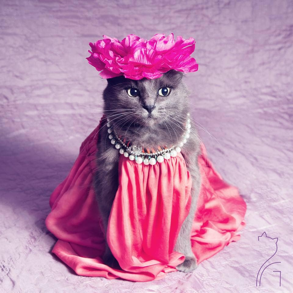 Pitzush the Cat Takes On Fashion Satire