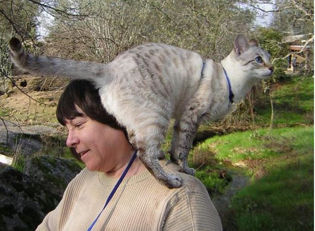 Is Your Kitty A Shoulder Cat Life With Cats