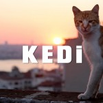 The City Where Cats Are King