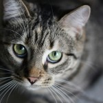 The Truth Behind Why Your Cat Meows At You