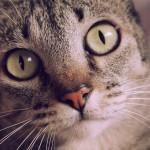 Kittify Website Translates Your Speech Into Cat Puns