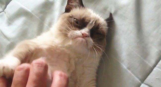 Grumpy Cat and the Belly Rub