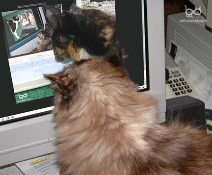 ICP 364 Kami scrutinizing Ripley watching Angelina contemplating