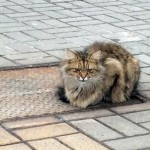Abandoned Cat Waits for His Owners in the Same Spot for a Year
