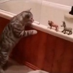 Cat Takes Control of Bath Toys