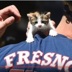 Firefighters Comfort Crying Kitten, Take It Back To Station With Them