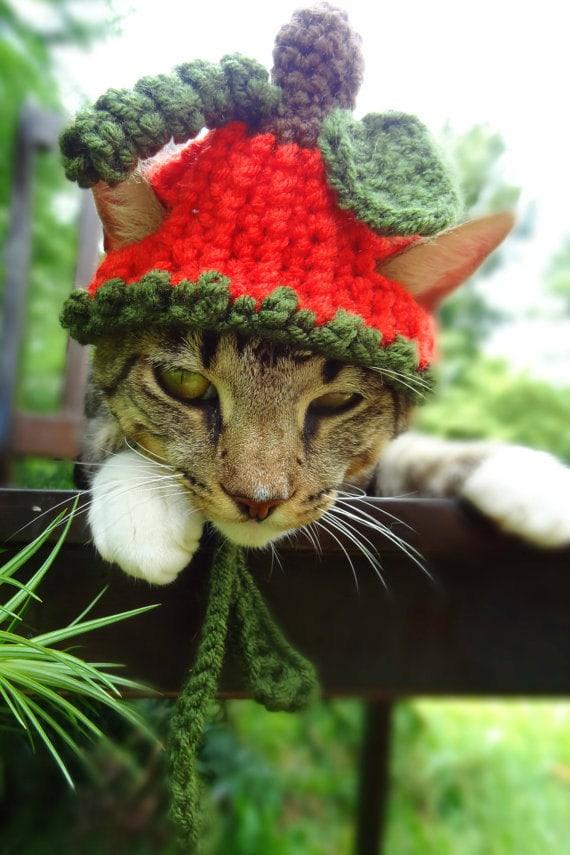 meredith langley pumpkin hat