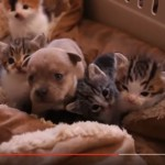 Cuddly Cat Family Adopts Orphan Pup