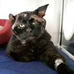 """""""Monkey"""" Cat With Sad Eyes Touches Hearts, Finds Home"""
