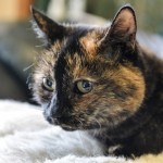 This Cat Has Lived in a Shelter for More Than 21 Years