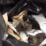 """""""Real Men"""" Rescue Kittens Found In Trash Bag"""
