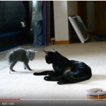 Kitten Acts Tough To Make Mom Fight Back