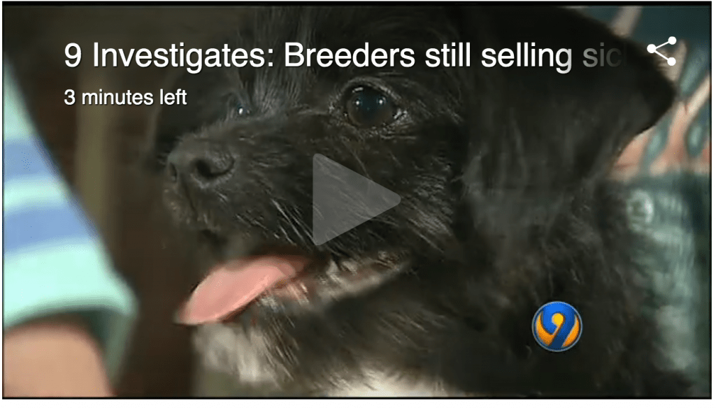 Craigslist Hall Of Shame: Sick And Dying Kittens And ...