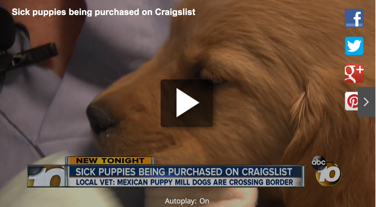 Craigslist Hall Of Shame: Sick And Dying Kittens And Puppies For