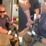 Cat Hides in Kitchen Stove and Survives Wildfire
