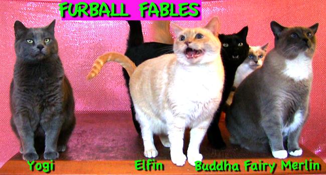 all 5 furballsb
