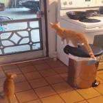 Escape Artist Cats