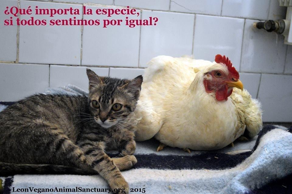 Source: Leon Vegano Animal Sanctuary