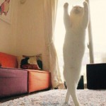 Mirko the Cat Gains Fame for His Ballet Moves
