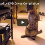 Suspicious Cats Whack DVD Drives