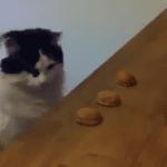 Cat Masters Magic Trick