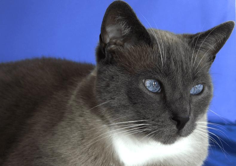 merlin blue eyes