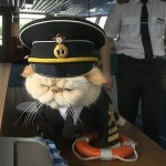 Sailor the Cat Oversees Russian River Cruises