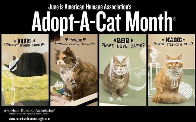 AHA Adopt-A-Cat Month