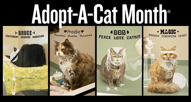 AHA Adopt-A-Cat Monthb