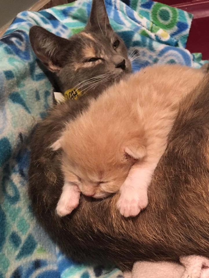 Sally's kitties 1