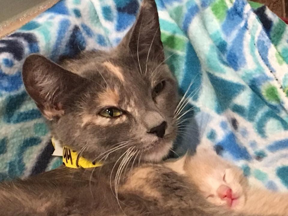 Sally's kitties 2