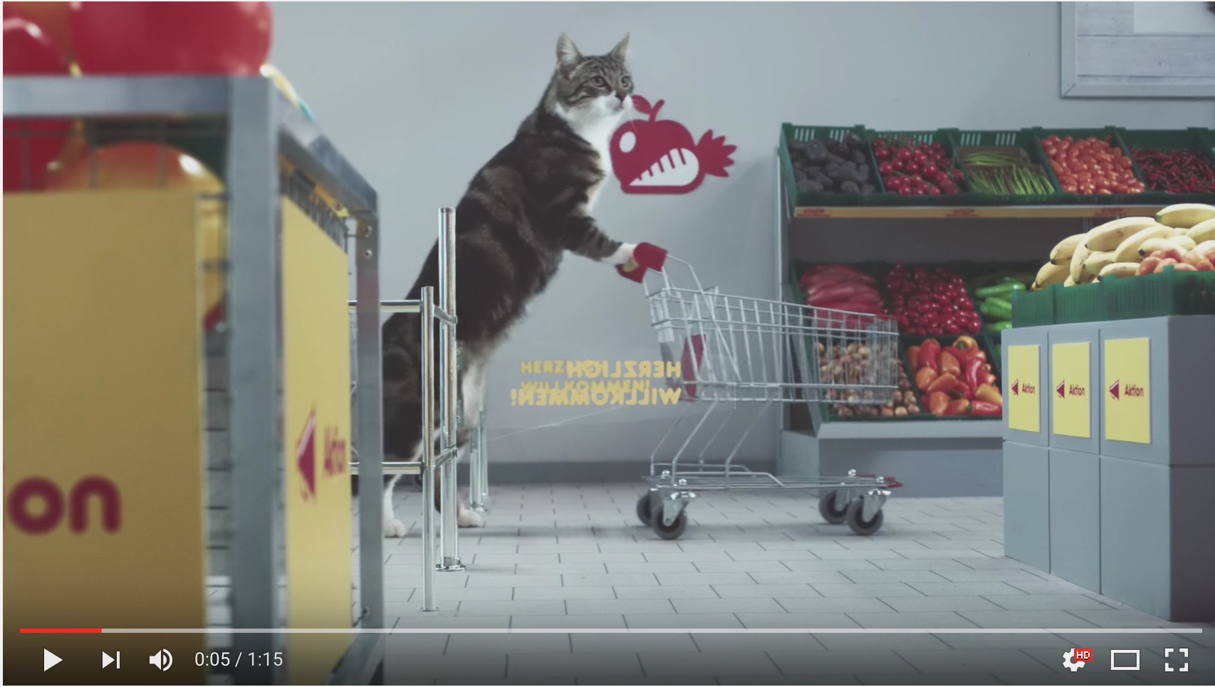 German Video Of Cats Shopping