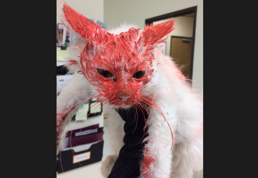 Jail Time for Man Who Spray Painted Murphy the Kitten