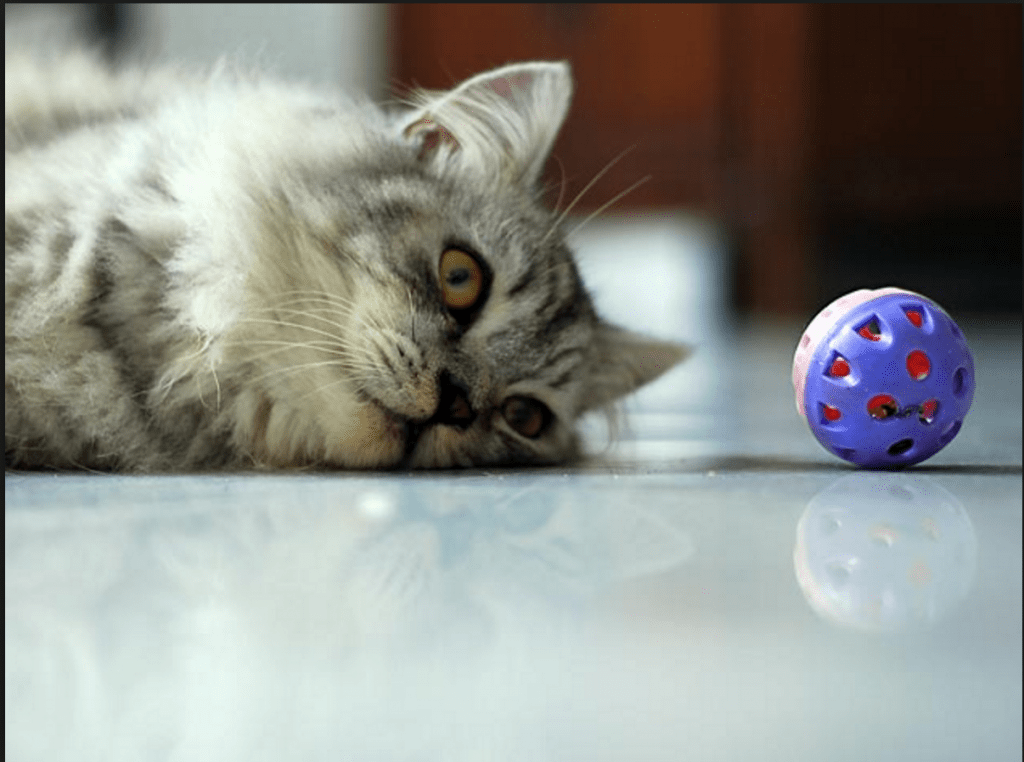 Study Says Cats Grasp Laws of Physics: It's All in the Stare