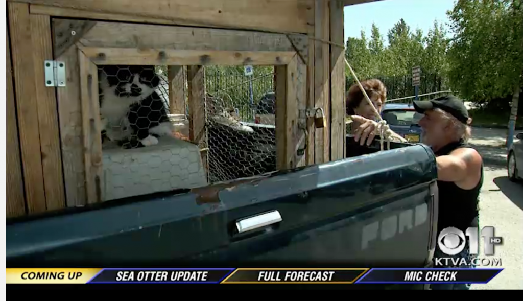 Cat Man Drives To Anchorage With 22 Feline Friends