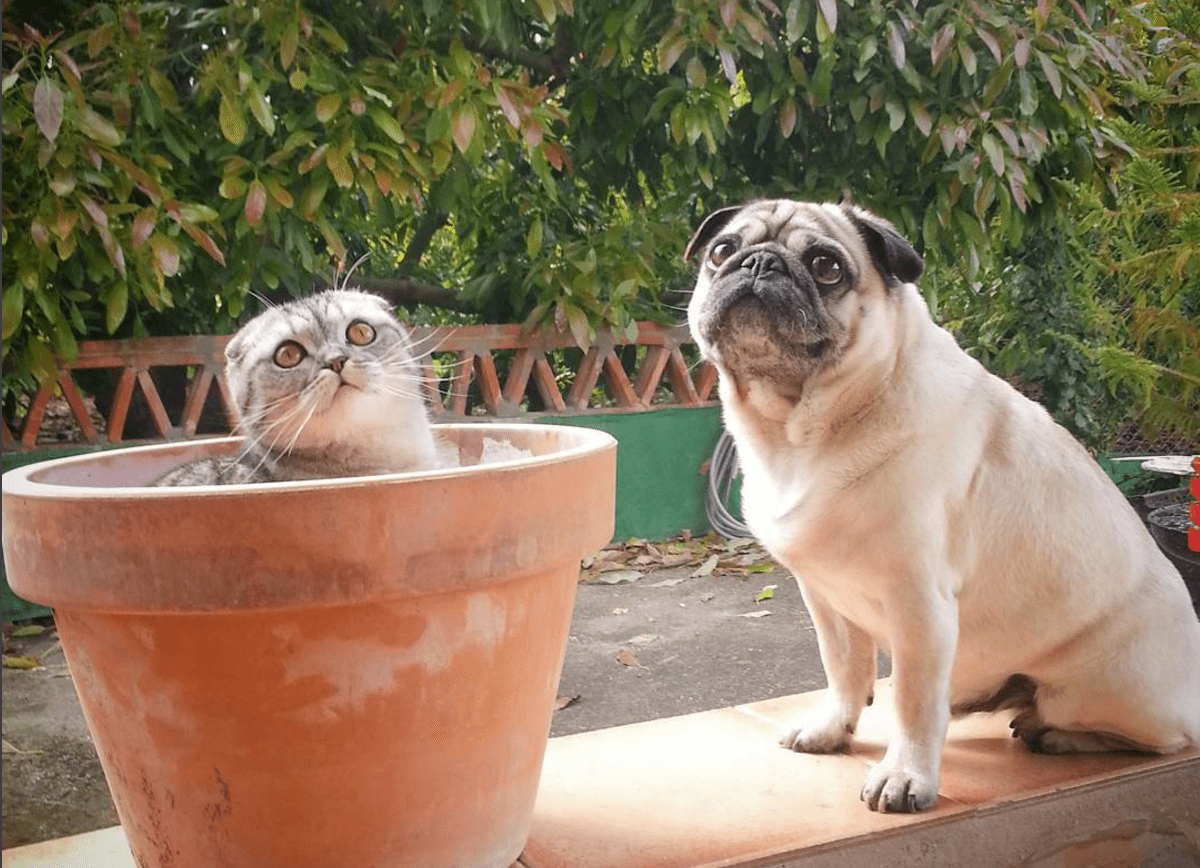 Cat And Pug Pals Travel Across Spain Life With Cats