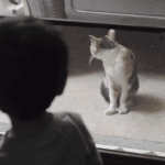 Little Boy and Cat Communicate Perfectly