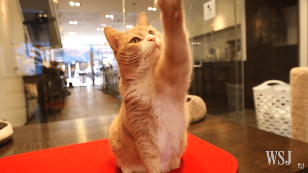 Go on a Cat Cafe Tour in New York City