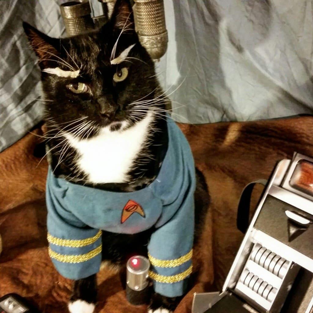 Image source: cat-cosplay.tumblr