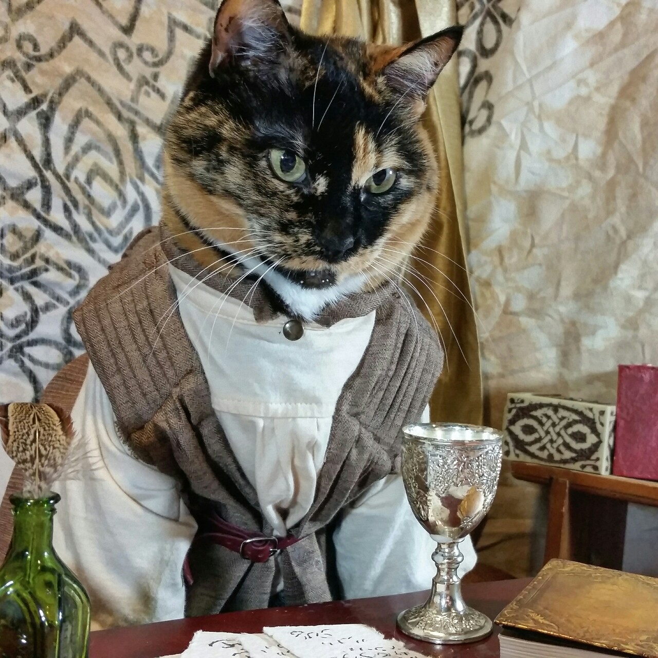 Cosplay Cats Are Taking Over the Internet - Life With Cats